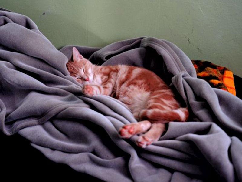 Gozer Sleeping