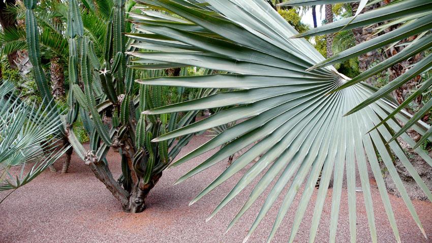 cactusyslmarrakesh