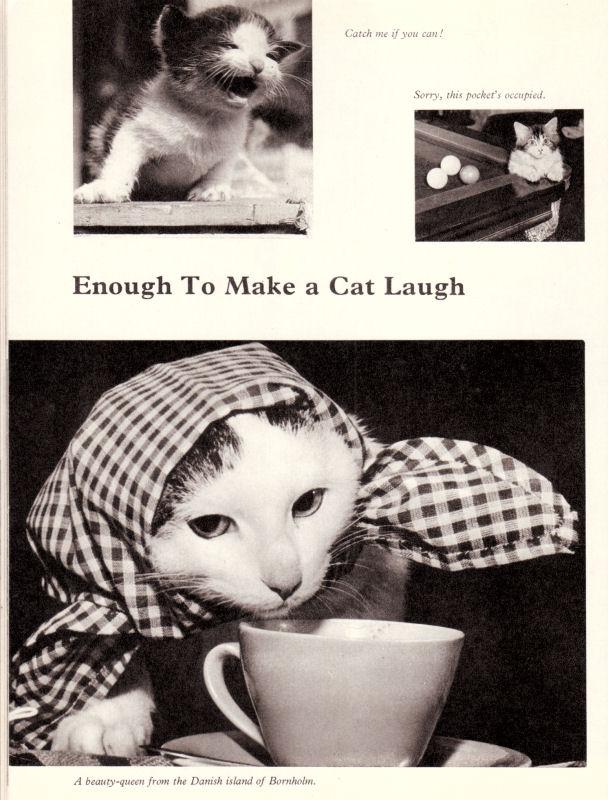 lol_Cats01