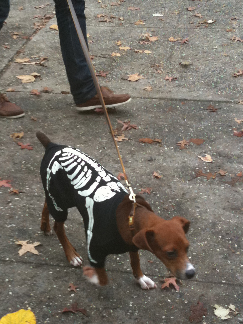 mcgolrick park dog costume parade