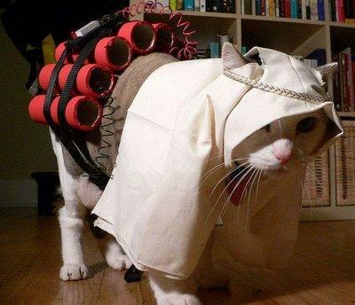 Terrorist Cat Costume